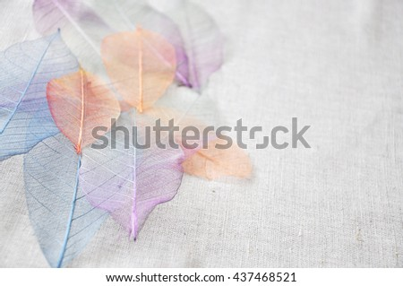 Colorful skeleton leaves on background point to you with empty space for text - stock photo