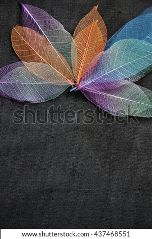Colorful skeleton leaves on black background with empty space for text - stock photo