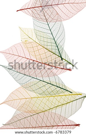 Colorful Skeleton Leaves on white background - stock photo