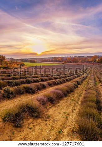 Colorful sky over lavender field - stock photo