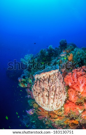 Colorful soft corals and sponges on a deep tropical coral reef - stock photo