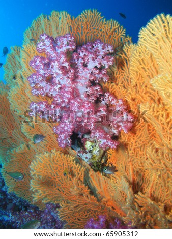 Colorful softcorals - stock photo