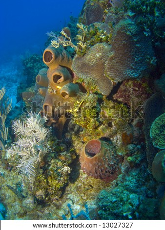 Colorful Sponges and Corals on a Cayman Island Reef - stock photo