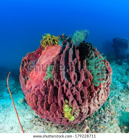 Colorful sponges and Crinoids on a deep coral reef - stock photo