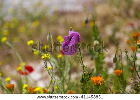 Colorful spring field flowers in Sicily, Italy - stock photo