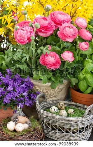 colorful spring flowers and easter eggs decoration. ranunculus, campanula, forsythia - stock photo