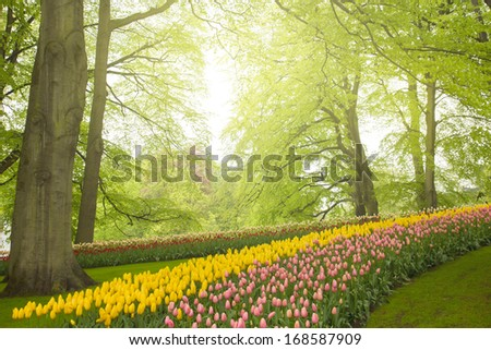 Colorful spring flowers and green  trees   in holland garden Keukenhof, Holland - stock photo