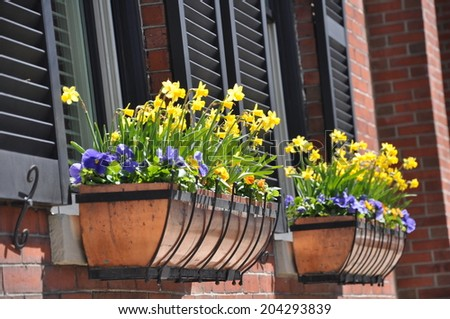 Colorful spring flowers decorate window boxes in Charlestown, Massachusetts