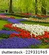 Colorful spring flowers  in holland garden Keukenhof, Netherlands - stock photo