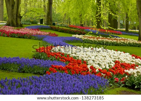 Colorful spring flowers  in holland garden Keukenhof, Netherlands - stock photo