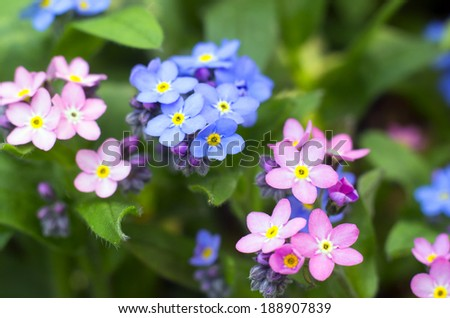 Colorful spring flowers in the garden. - stock photo