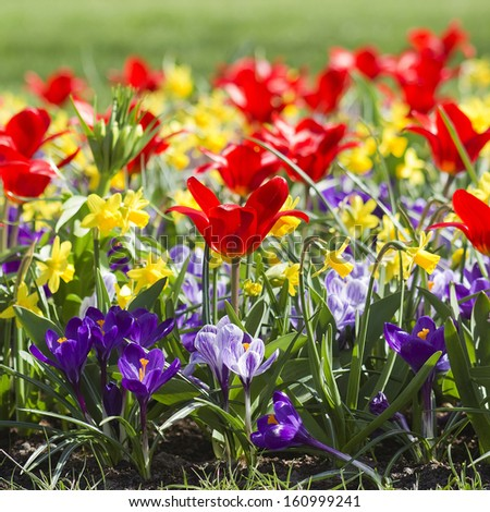 Colorful spring flowers in the park - stock photo