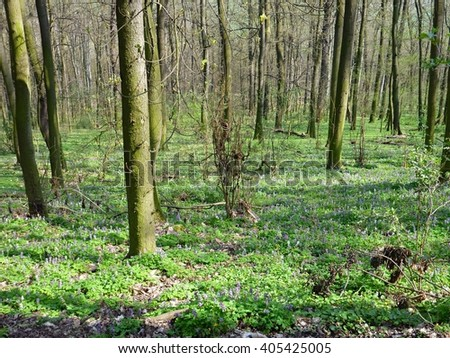 colorful spring flowers in the sunny wood