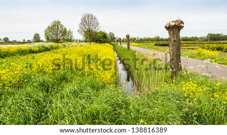 Colorful spring landscape in the Netherlands. - stock photo