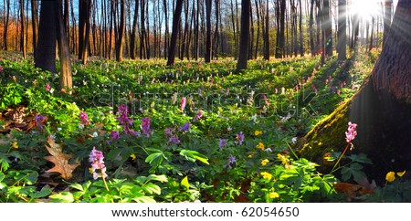 Colorful spring landscape with flowers