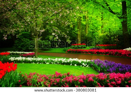 Colorful spring lawn with mix of flowers  in  garden Keukenhof, Holland, toned - stock photo
