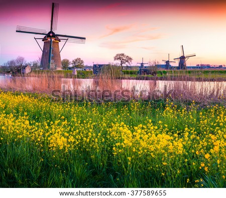 Colorful spring scene in the famous Kinderdijk canals with windmills, UNESCO world heritage site. Sunset in Dutch village Kinderdijk with a field of blossom colza, Netherlands, Europe.
