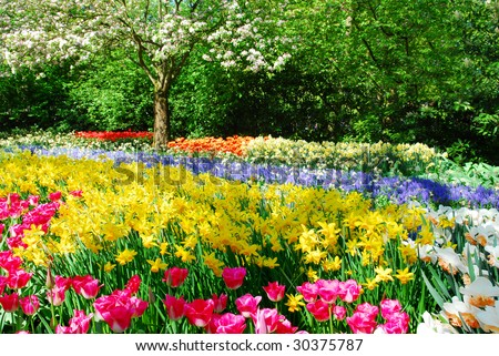 Colorful springflowers and blossom in dutch spring garden 'Keukenhof' in Holland - stock photo