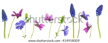 Colorful springflowers on white background - stock photo