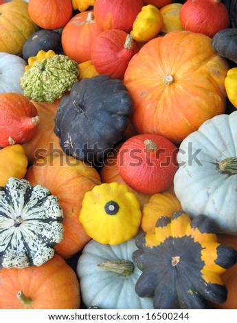 Colorful squash collection (Autumn 2008, Juckerfarmart, Zurich) - stock photo