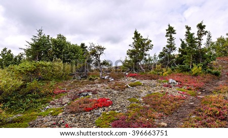 Colorful sub-alpine vegetation during Autumn in the mountains along the Denali highway in Alaska. - stock photo