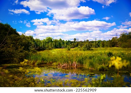 Colorful summer landscape. Nature background, river bank. Sunny day outdoor and trees under blue sky. - stock photo
