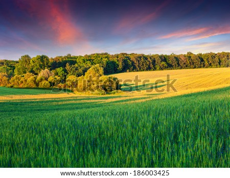 Colorful summer landscape with field of wheat - stock photo