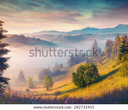 Colorful summer morning in the Carpathian mountains. Instagram toning. - stock photo
