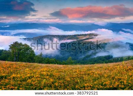 Colorful summer scene in the foggy mountains. Misty sunrise in Carpathians, Ukraine, Europe. - stock photo