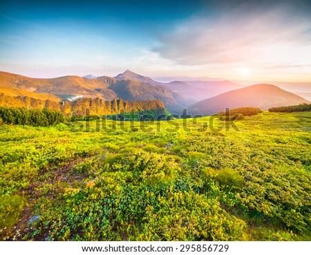 Colorful summer sunrise in the foggy Carpathian mountains. The highest mountain of Ukraine Hoverla 2061 m. Chornogora ridge, Ukraine. - stock photo