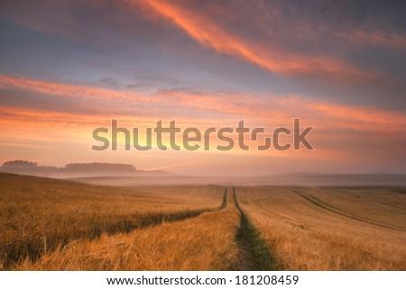 Colorful sunrise over field of rye./ Sunrise. - stock photo