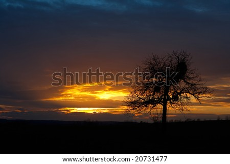 Colorful sunset with a lonely tree against the colored sky