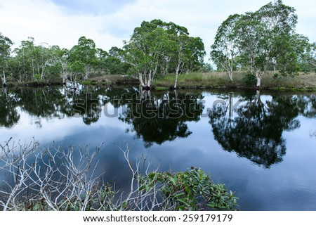 Colorful swam forest reflection on the still waters of flat Lake - stock photo