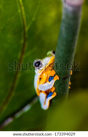 Colorful theme of exotic frog