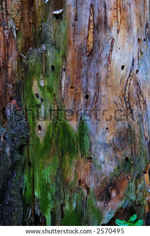 Colorful tree body texture background. - stock photo