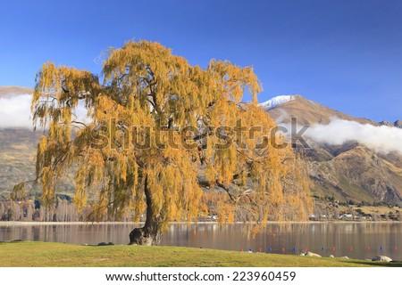 Colorful Tree by the shore of Lake Wanaka in autumn, Otago region, South Island, New Zealand. - stock photo
