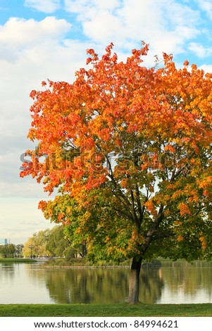 colorful tree near the river - stock photo
