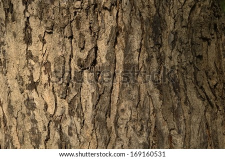 Colorful Tree trunk textured background