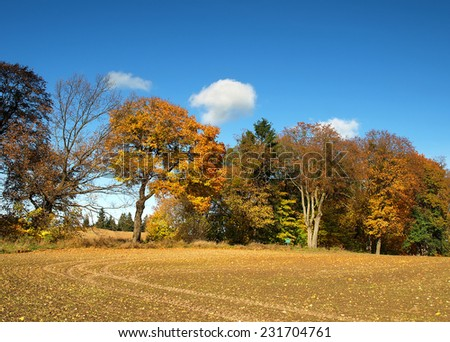 Colorful trees at the cultivated field - stock photo