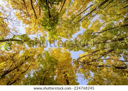 colorful trees branches in sunny forest, autumn natural background - stock photo