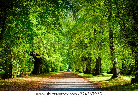 Colorful trees in autumn park during a sunny day - stock photo