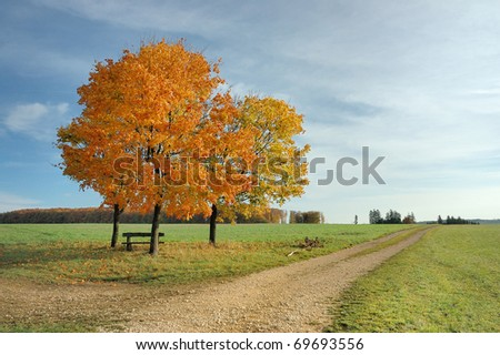 Colorful Trees in Fall - stock photo