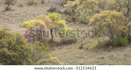 Colorful trees on a Texas Hill Country hillside during spring - stock photo