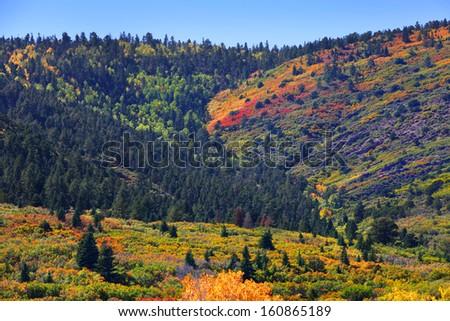 Colorful trees on Colorado mountains - stock photo