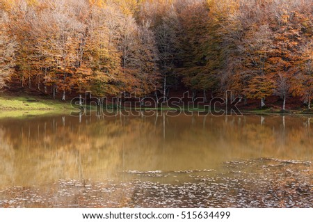 colorful trees reflected in a lake during fall.