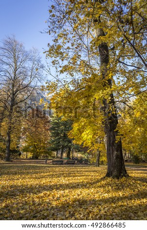 Colorful trees with a bed of yellow leafs around them as autumn goes by in Innsbruck, Austria