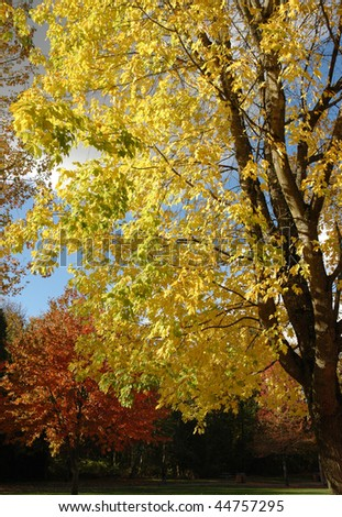Colorful trees with bright foliage at the park - stock photo