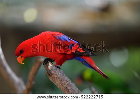 colorful tropical bird in the forest