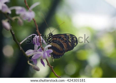 Colorful tropical butterfly in a rain forest setting - stock photo