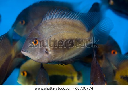 Colorful tropical fish - stock photo